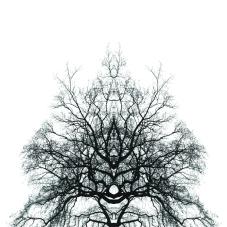 treereflect2